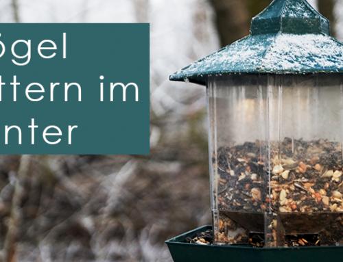 Vögel füttern im Winter – Hilfe oder Gefahr für die Tiere?
