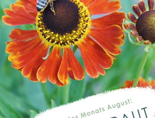 Pflanze des Monats (08/19): Sonnenbraut